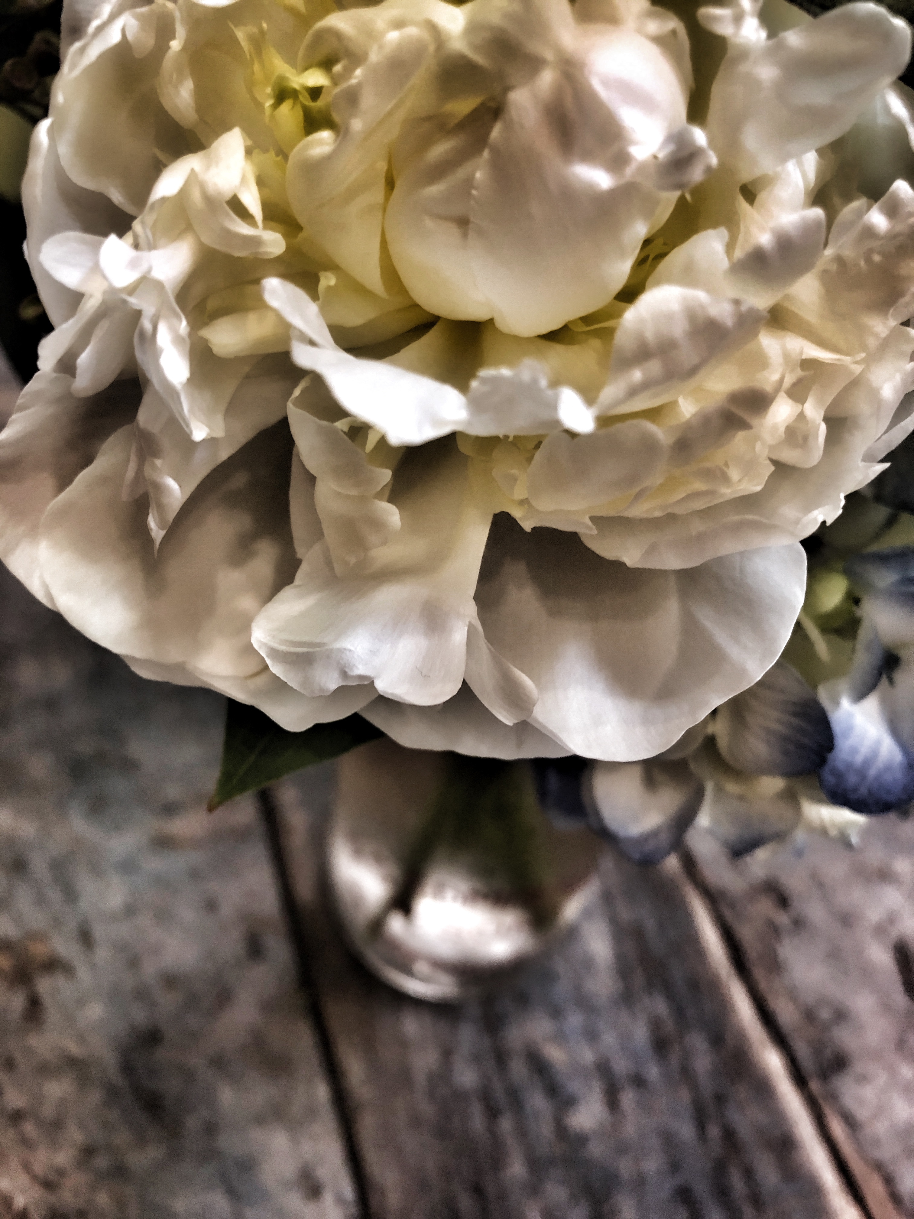 University Florist Flowers And Gifts For Chapel Hill Carrboro And